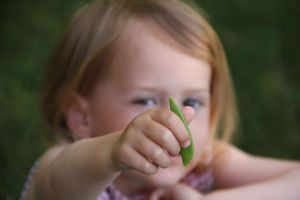 The Pea Thief
